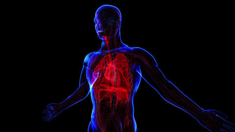 Respiratory system Stock Video Footage