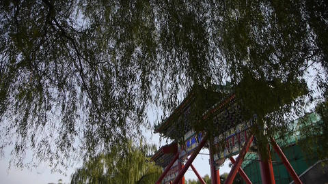 swing willow & orient ancient Memorial arch in beijing china Footage