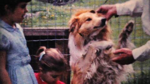 Cute Girls With Puppies 1964 Vintage 8mm film Stock Video Footage
