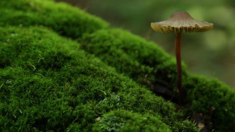 mushroom growing from tree Stock Video Footage