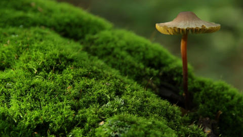 mushroom growing from tree Stock Video Footage