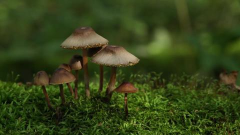 mushrooms on moss Stock Video Footage