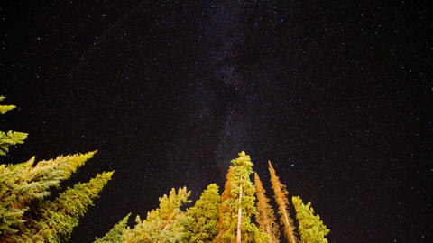 Milky Way Timelapse with trees Footage