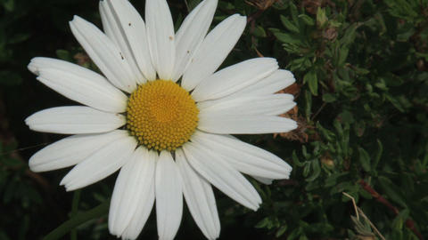 White flower Stock Video Footage