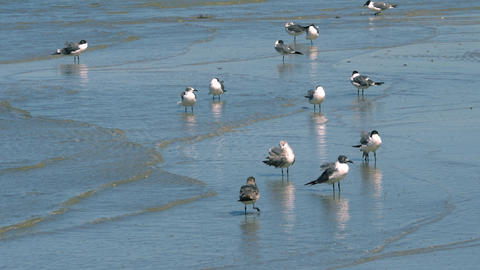 Group of Seagulls Stand in Shallow Water, 4K Footage