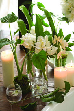 close-up of flower arrangement フォト