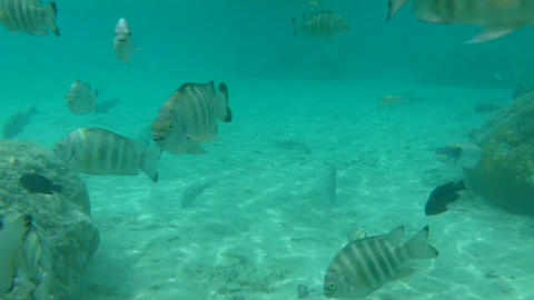 Time lapse video,Lots of fish swimming underwater Footage