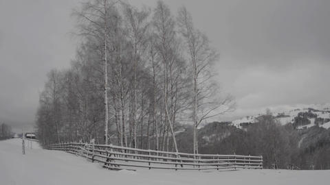 Horizontal panorama with birch forest and snow-covered hills on top of a hill crossed by a man on a Live Action