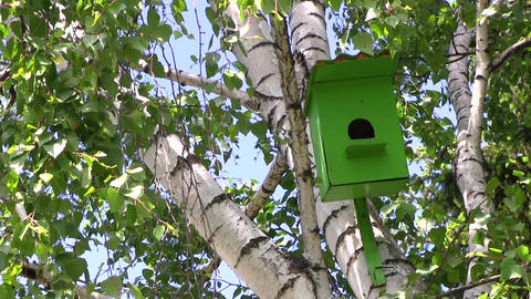 Wooden green birdhouse hangs on a birch tree at summer day in city park Live Action