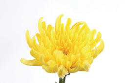beautiful flower 相片