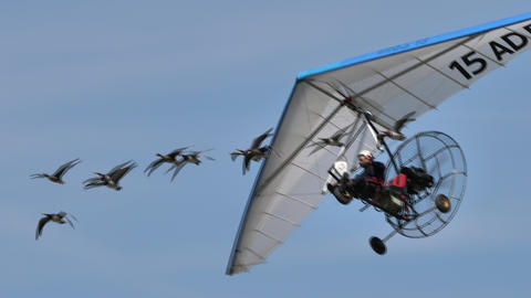 Moullec famous french birdman in flight with a flock of birds amazing close-up Live Action