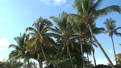 Island feeling Stock Video Footage