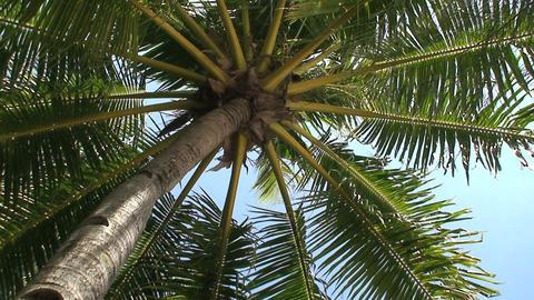 Palmtree Stock Video Footage