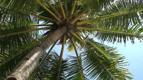 Palmtree Stock Video Footage