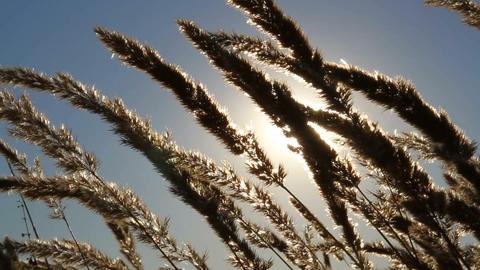 Prairie Grass stock footage