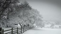 Winter Field Stock Video Footage