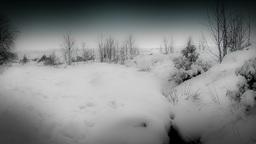 Winter Moor Land Stock Video Footage
