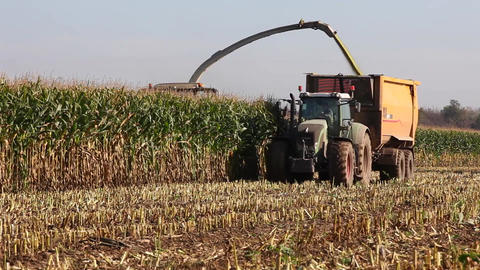 Harvesting the maize crop for silage Stock Video Footage