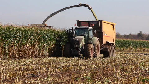 Harvesting the maize crop for silage Footage