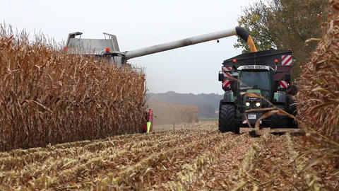 Thresher harvesting maize for silage Stock Video Footage