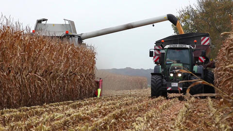 Thresher harvesting maize for silage Footage