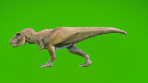 Angry Dinosaur T-Rex walks in a looping seamless animation. Reptile in front of green screen. Animation