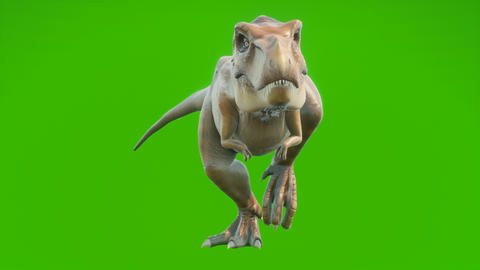 T-Rex Dinosaur walks in a looping seamless animation. Reptile in front of green screen. Animation Animation