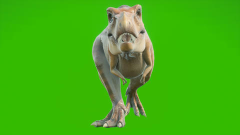 The T-Rex dinosaur runs in a looping seamless animation. Reptile in front of green screen. Animation Animation