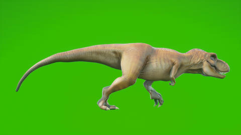 Angry T-Rex dinosaur runs in a looping seamless animation. Reptile in front of green screen. Animation