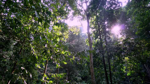Morning view of rainforest morning Live Action