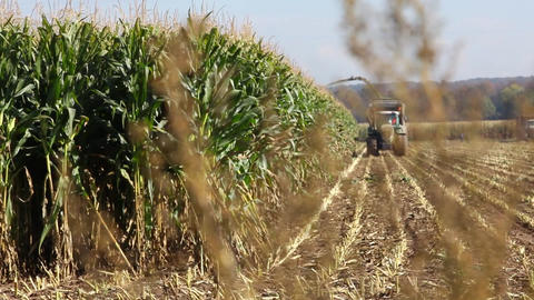 Tractor Harvesting Maize Or Corn stock footage