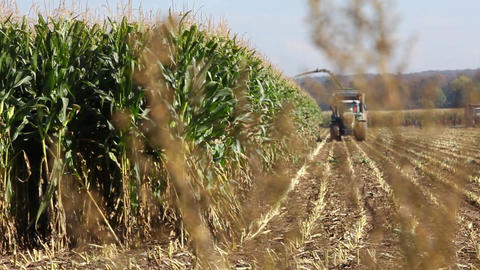 Tractor harvesting maize or corn Stock Video Footage