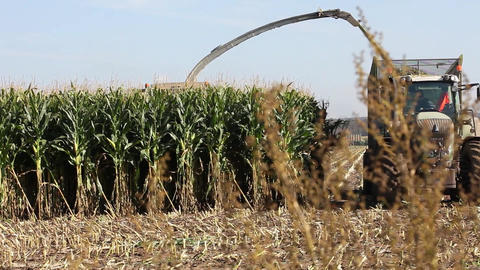 Silage corn harvest Stock Video Footage