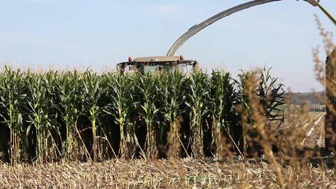 Silage corn harvest Stock Video Footage