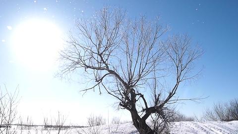 Winter Sun 0