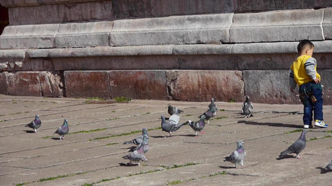 a boy catch pigeon & fall down in forbidden city red wall Footage