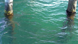 Clear Sea Water Under a Jetty Stock Video Footage