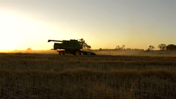 Harvesting a Canola Crop at Sunset on a Farm in Australia Footage