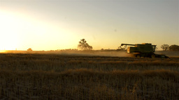 Harvesting a Canola Crop at Sunset on a Farm in Australia Stock Video Footage