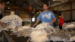 Rousabouts Throwing and Skirting Freshly Shorn Wool in a... Stock Video Footage