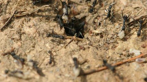 ants Footage