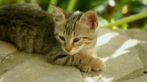 sleepy cat Stock Video Footage