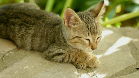 Sleepy Cat stock footage