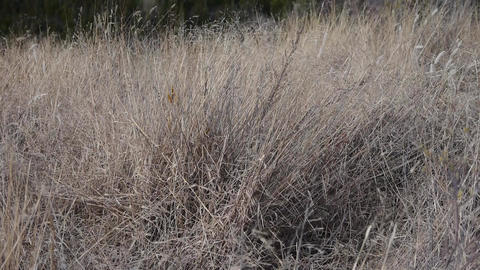 The gray parched grass on mountain in late autumn in wind Stock Video Footage