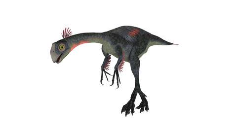 恐竜 Animation