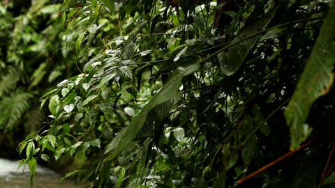 Waterfall in cloud forest Stock Video Footage
