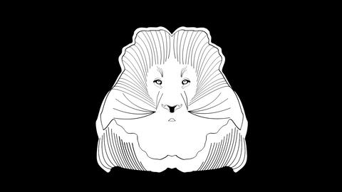 Video clip drawing of lion head in tribal design. Animated symmetric animal face Animation