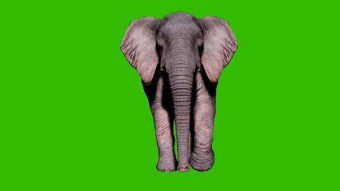 Large elephant running on the ground in front of green screen. Seamless loop animation for animals, Animation
