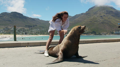 Woman in contsct with a fur seal inthe wild, Cape town South Africa Live Action