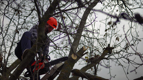 Lumberjack With Chainsaw 1